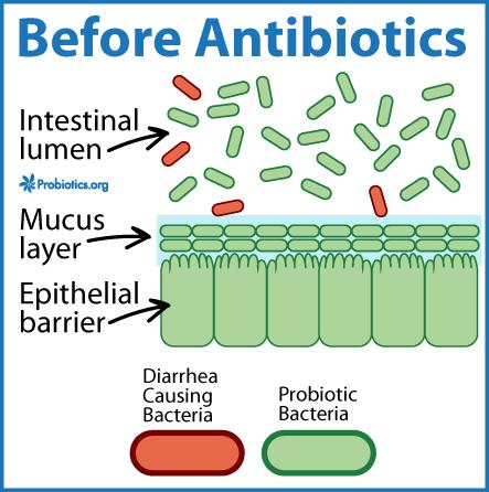 Take Probiotics While On Antibiotics I Always Do Probiotics Org